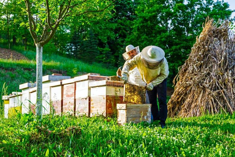 Εργασία στο μελισσουργείο στοκ εικόνα