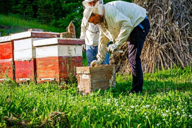 Εργασία στο μελισσουργείο στοκ φωτογραφία με δικαίωμα ελεύθερης χρήσης