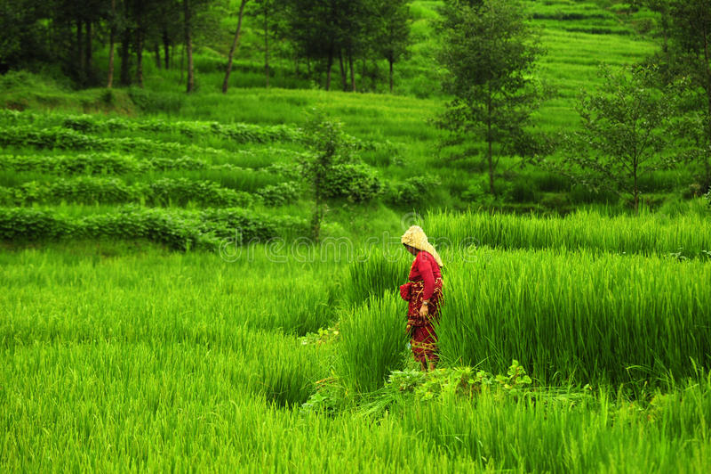 Εργασία της Farmer στοκ εικόνα με δικαίωμα ελεύθερης χρήσης