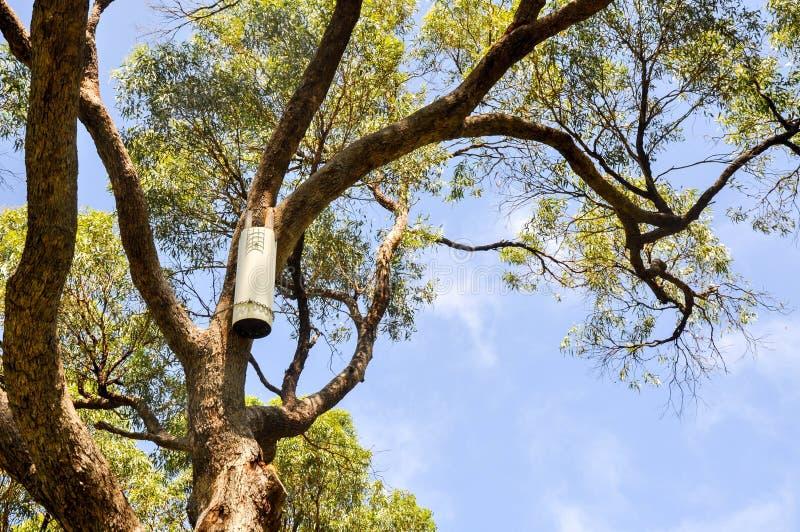 Εργαλεία περικοπής κηπουρών στοκ εικόνα με δικαίωμα ελεύθερης χρήσης