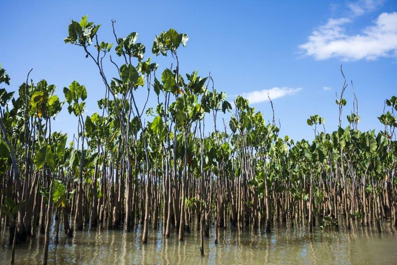 Εργοστάσια νερού στον ποταμό Parnaiba, Βραζιλία στοκ φωτογραφία με δικαίωμα ελεύθερης χρήσης