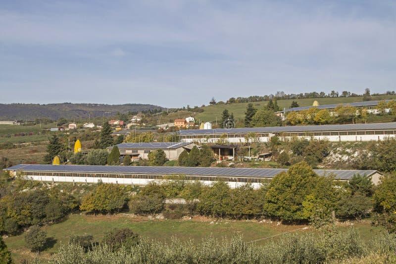Εργοστάσιο που καλλιεργεί στο Monti Lessinis στοκ εικόνα