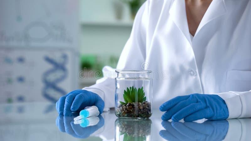 Ερευνητής βιοχημείας που εξετάζει τις πράσινες εγκαταστάσεις δοκιμής στο εργαστήριο, ανάλυση στοκ εικόνα με δικαίωμα ελεύθερης χρήσης