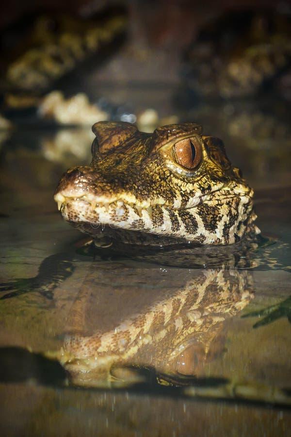 Ερπετά από το ζωολογικό κήπο στοκ εικόνες με δικαίωμα ελεύθερης χρήσης
