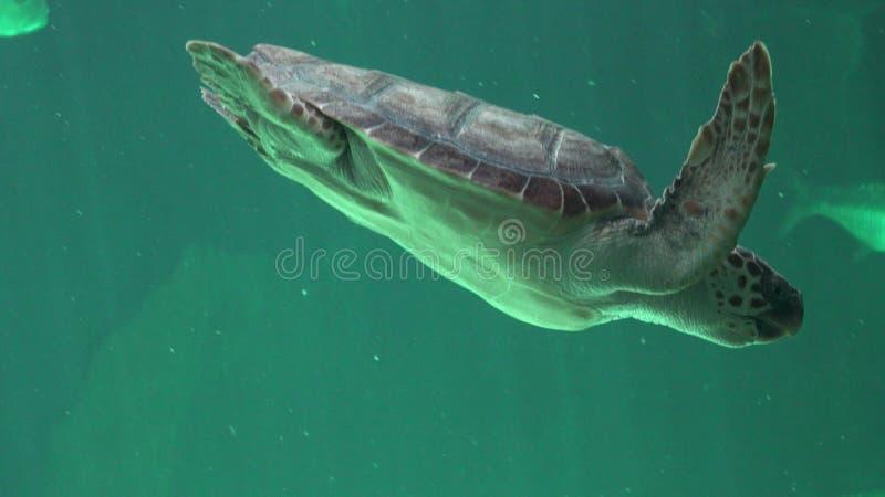 Ερπετά και χελώνες θάλασσας στοκ φωτογραφίες με δικαίωμα ελεύθερης χρήσης