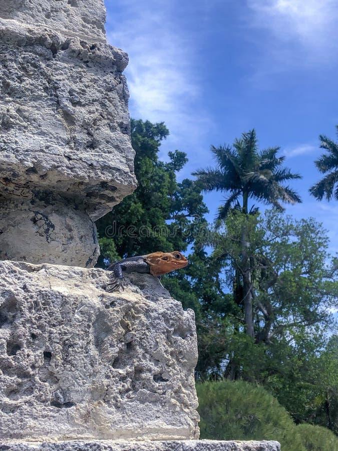 Ερπετό με ένα κίτρινο κεφάλι στοκ φωτογραφία