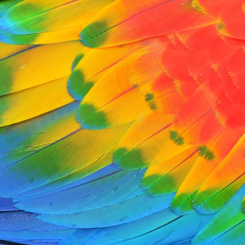 Ερυθρά φτερά Macaw στοκ εικόνα με δικαίωμα ελεύθερης χρήσης