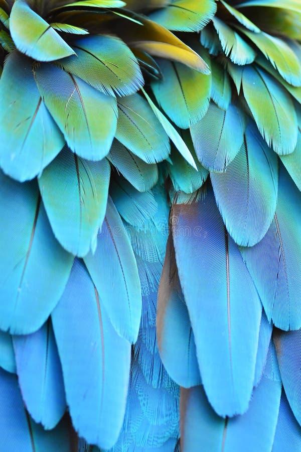 Ερυθρά φτερά Macaw στοκ φωτογραφίες με δικαίωμα ελεύθερης χρήσης