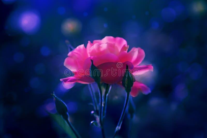 Ερυθρό λουλούδι στη νύχτα στοκ εικόνες