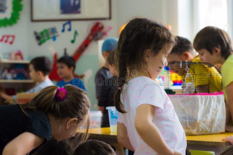 Εσκί Σεχίρ, Τουρκία - 5 Μαΐου 2017: Προσχολικά παιδιά που ανταποκρίνονται σε ένα ζωικό γεγονός ημέρας στον παιδικό σταθμό στοκ φωτογραφίες με δικαίωμα ελεύθερης χρήσης