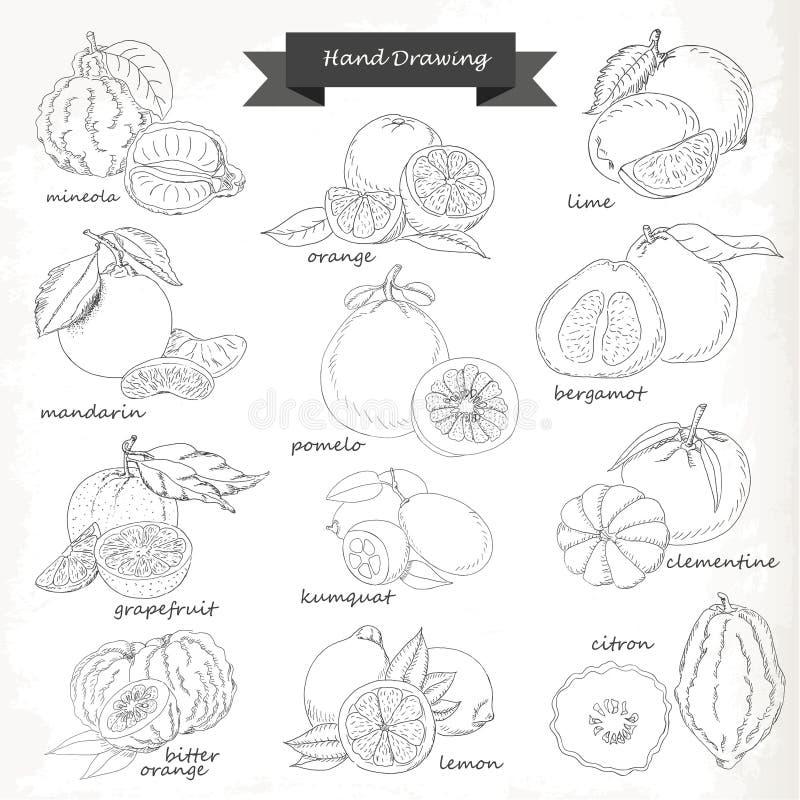 εσπεριδοειδή που τίθεν& Διανυσματική απεικόνιση σκίτσων σχεδίων χεριών απεικόνιση αποθεμάτων