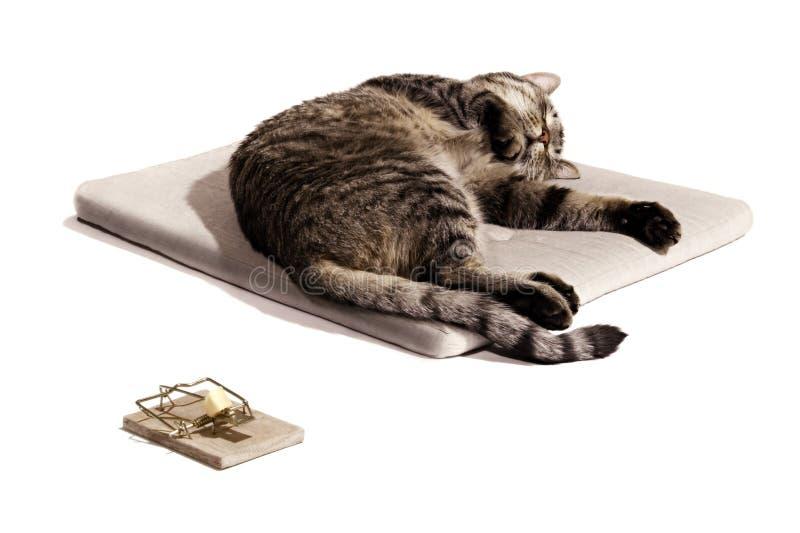 εστίαση ονείρου γατών στοκ εικόνες