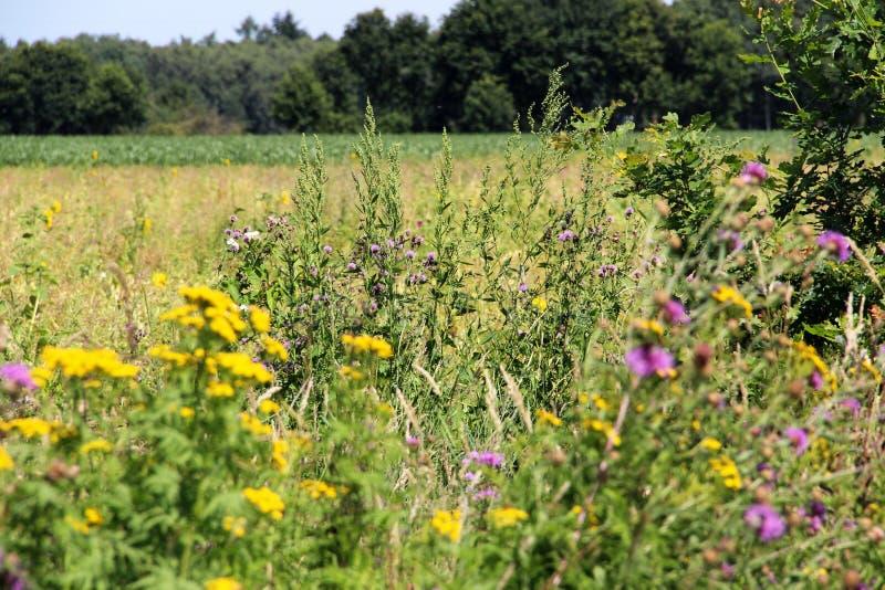 Εστίαση στη μέση σε ένα λουλούδι στοκ εικόνα με δικαίωμα ελεύθερης χρήσης