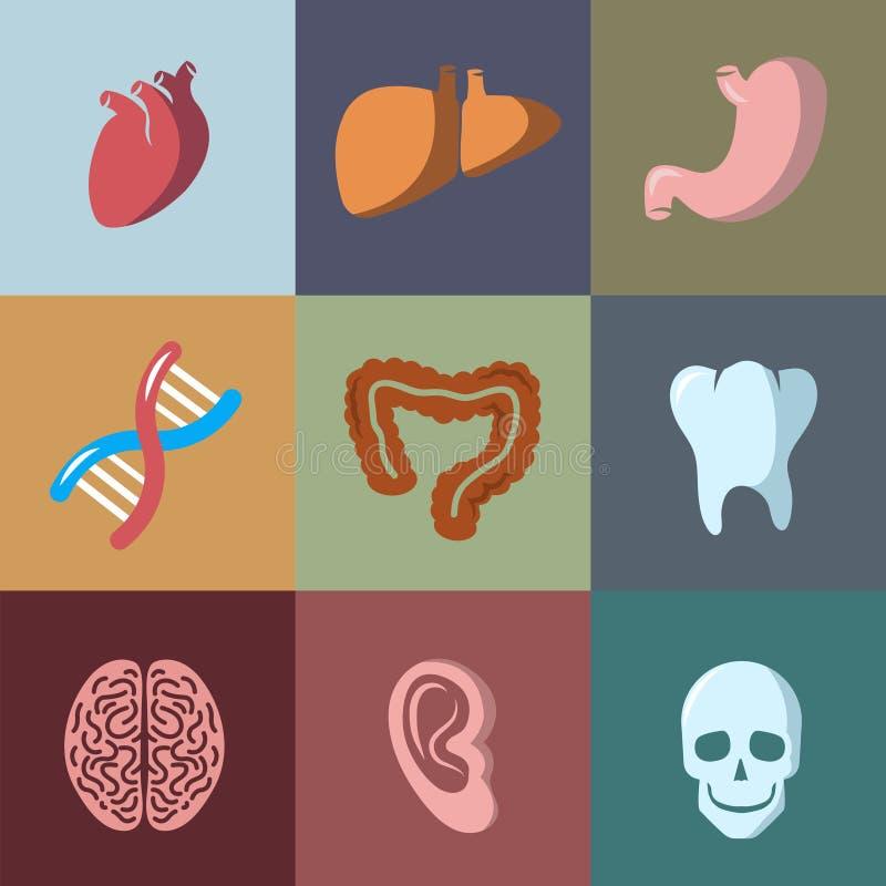 Εσωτερικά ανθρώπινα επίπεδα διανυσματικά εικονίδια οργάνων καθορισμένα διανυσματική απεικόνιση
