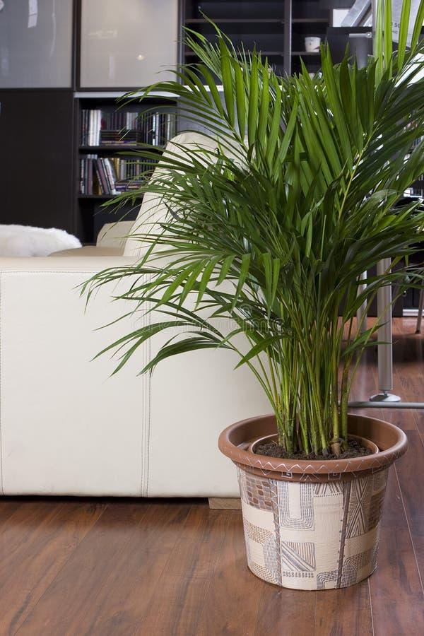 εσωτερικά δοχεία φυτών φ&ups στοκ φωτογραφία με δικαίωμα ελεύθερης χρήσης