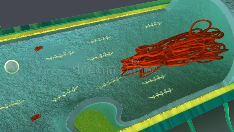 Εσωτερικά μέρη των βακτηριδίων διανυσματική απεικόνιση