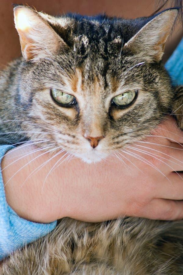 Εσωτερική γάτα σπιτιών στοκ εικόνα