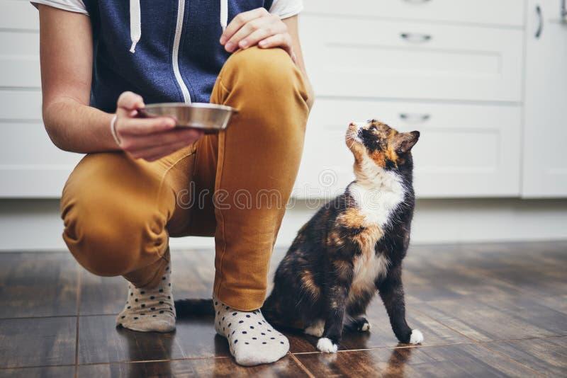 Εσωτερική ζωή με τη γάτα στοκ εικόνα