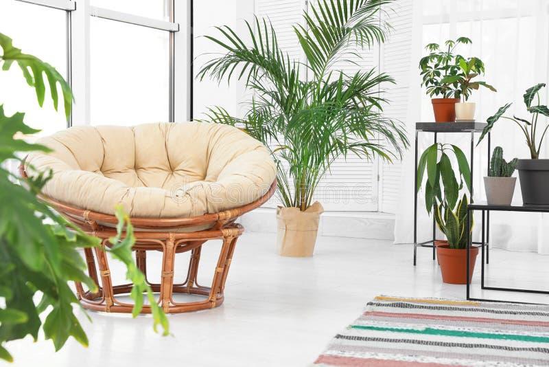 Εσωτερικό καθιστικών με τη papasan καρέκλα και τις εσωτερικές εγκαταστάσεις στοκ φωτογραφία με δικαίωμα ελεύθερης χρήσης
