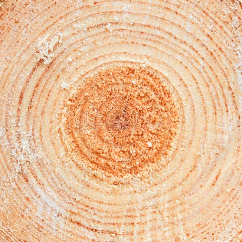 Ετήσια δαχτυλίδια στο πριονισμένο ξύλο ξυλείας δέντρων πεύκων στοκ φωτογραφίες με δικαίωμα ελεύθερης χρήσης