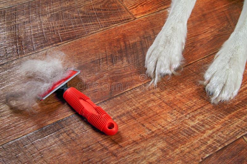 Ετήσιο σκυλί molt άνοιξη έννοιας Η κόκκινη rakers βούρτσα με το κατοικίδιο ζώο μαλλιού βρίσκεται στο πάτωμα δίπλα στα πόδια σκυλι στοκ φωτογραφία