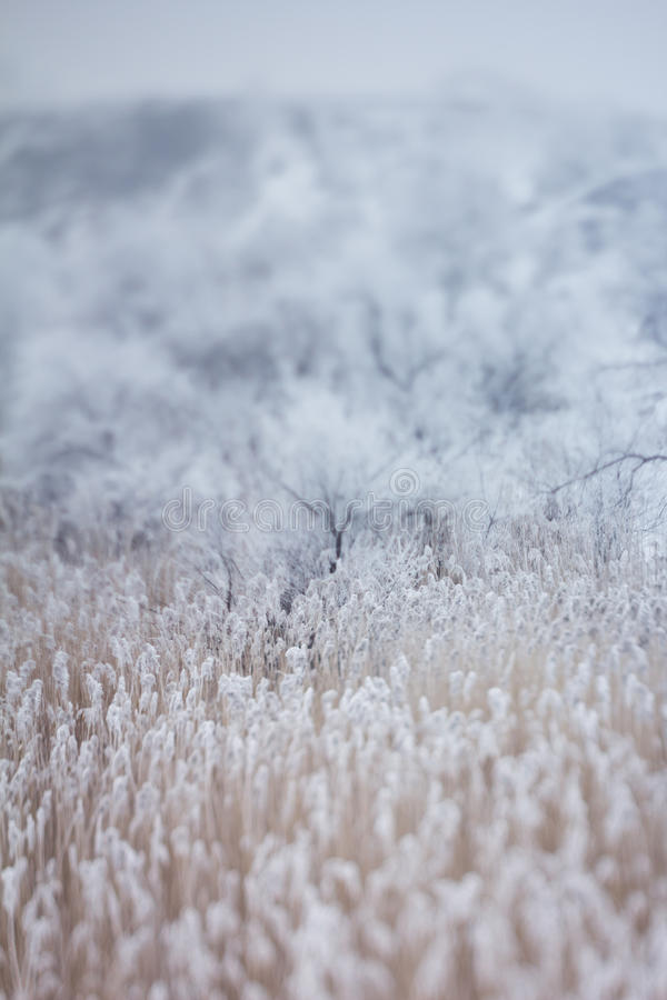 Ευγενές υπόβαθρο χειμερινού χιονιού στοκ φωτογραφία με δικαίωμα ελεύθερης χρήσης