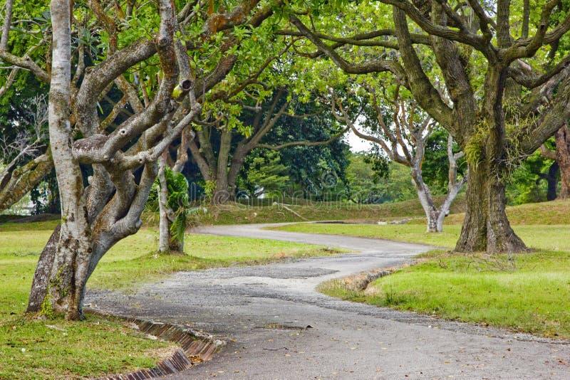 ευθυγραμμισμένο δέντρο μονοπατιών στοκ φωτογραφία