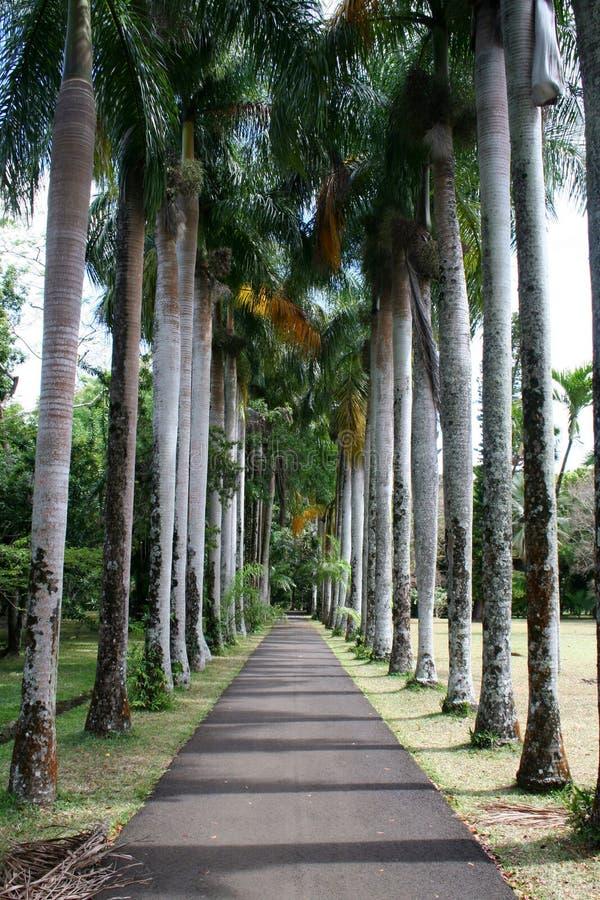 ευθυγραμμισμένο δέντρο μονοπατιών στοκ φωτογραφίες με δικαίωμα ελεύθερης χρήσης