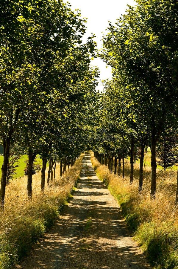 ευθυγραμμισμένο δέντρο μ& στοκ φωτογραφίες με δικαίωμα ελεύθερης χρήσης
