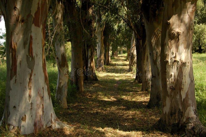 ευθυγραμμισμένο δέντρο στοκ εικόνες