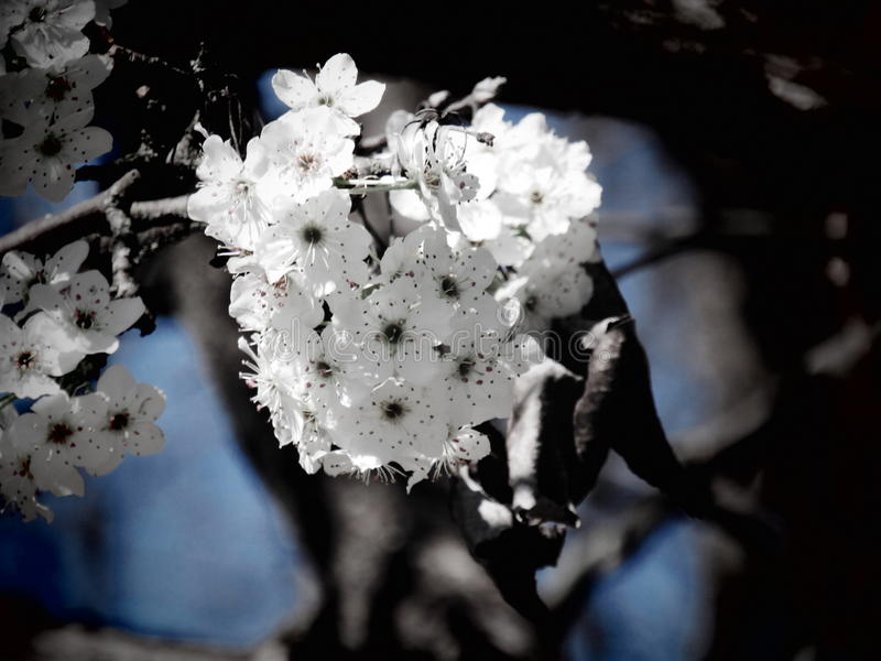 λευκό ανθών στοκ φωτογραφία