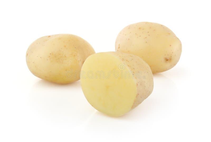 λευκό πατατών στοκ εικόνες