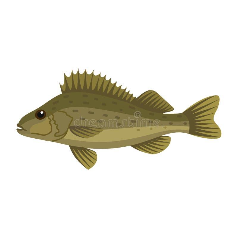Ευρασιατικά ψάρια παπάδων Ruffe διανυσματική απεικόνιση