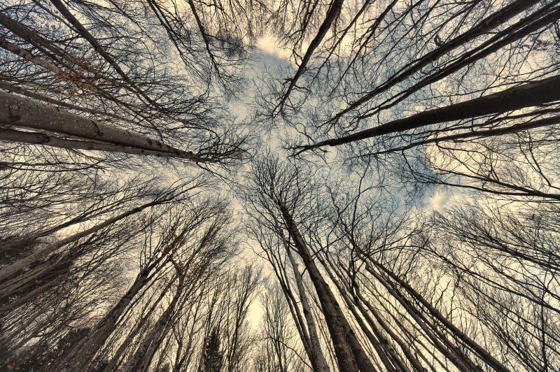 Ευρεία άποψη του δάσους στοκ εικόνες