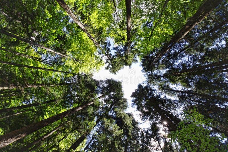 Ευρεία άποψη του δάσους στοκ εικόνα με δικαίωμα ελεύθερης χρήσης