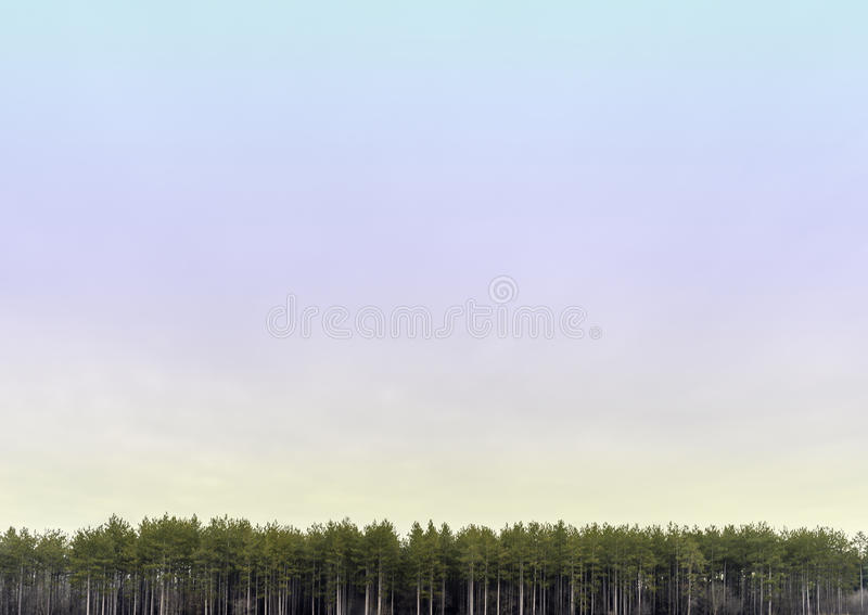 Ευρεία ανοικτή κρητιδογραφία που χρωματίζεται skyscape με τη γραμμή ψηλών δέντρων α πεύκων στοκ φωτογραφία με δικαίωμα ελεύθερης χρήσης