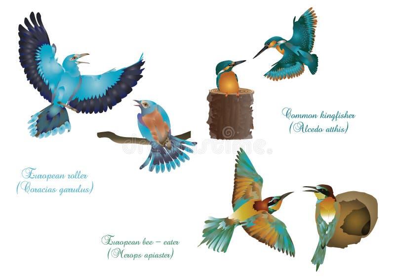 Ευρωπαϊκά όμορφα ζεύγη πουλιών απεικόνιση αποθεμάτων