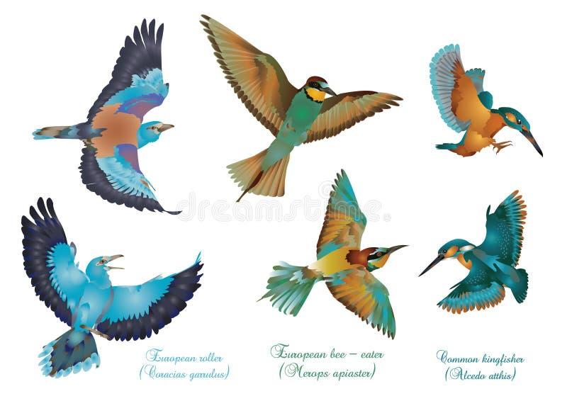 Ευρωπαϊκά όμορφα πουλιά διανυσματική απεικόνιση