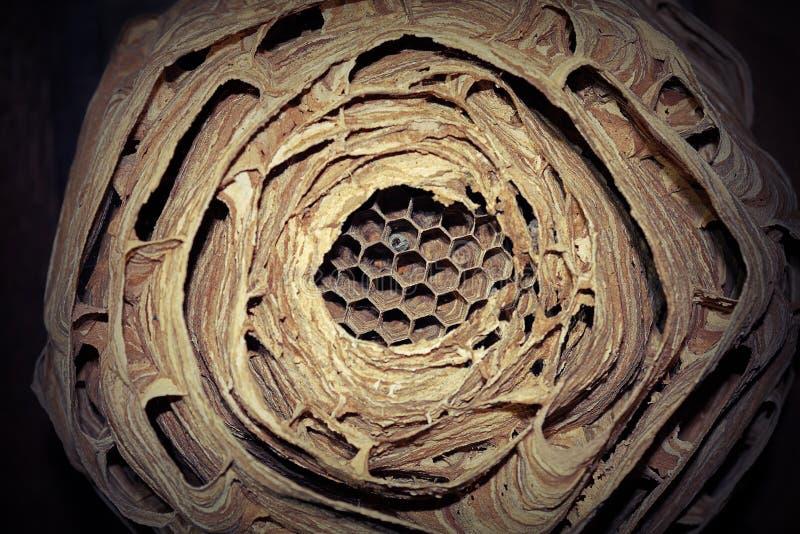 Ευρωπαϊκή φωλιά hornet στοκ εικόνες με δικαίωμα ελεύθερης χρήσης