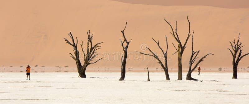 Ευρύς-καλλιεργημένη άποψη των αλατισμένων παν και πετρώνων δέντρων Deadvlei στην επιφύλαξη άγριας φύσης Sossusvlei στη Ναμίμπια στοκ φωτογραφίες με δικαίωμα ελεύθερης χρήσης