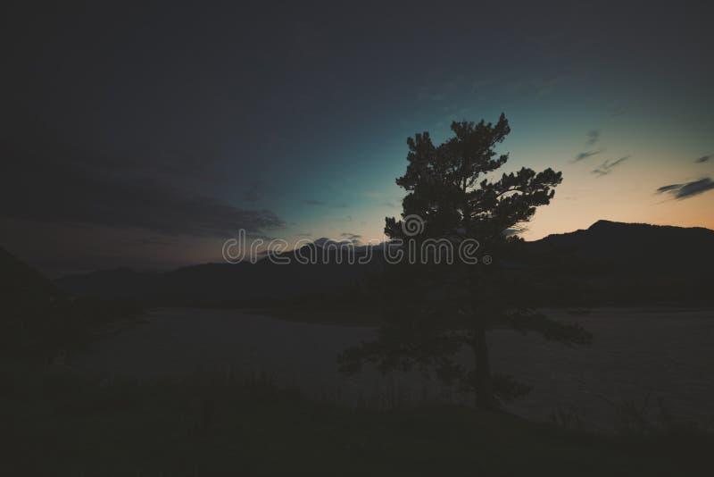 Ευρύς πυροβολισμός γωνίας του δέντρου στις τοποθετήσεις βουνών στοκ εικόνες