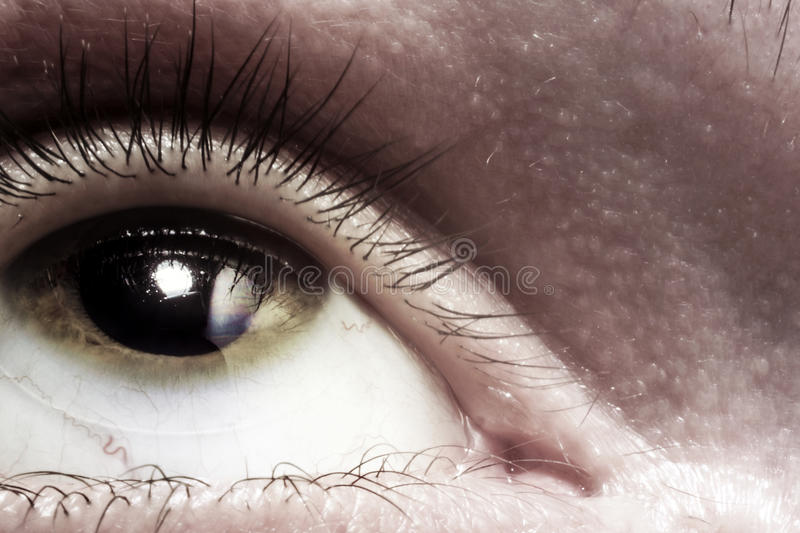 Ευρύ ανοικτό μάτι που φαίνεται ανοδικό στοκ εικόνες