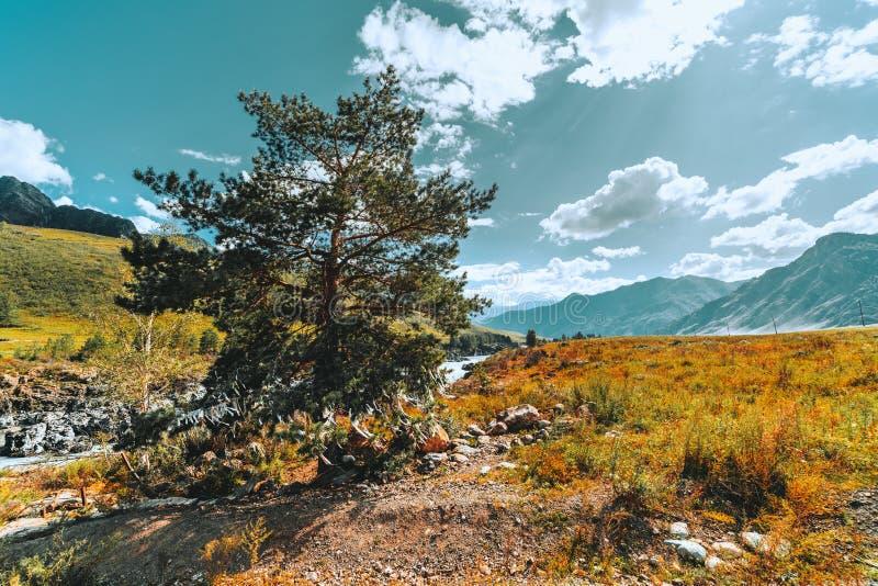 Ευρύ τοπίο βουνών γωνίας με το πεύκο στο μέτωπο στοκ φωτογραφία