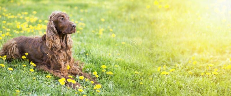 Ευτυχές έμβλημα σκυλιών στοκ φωτογραφία