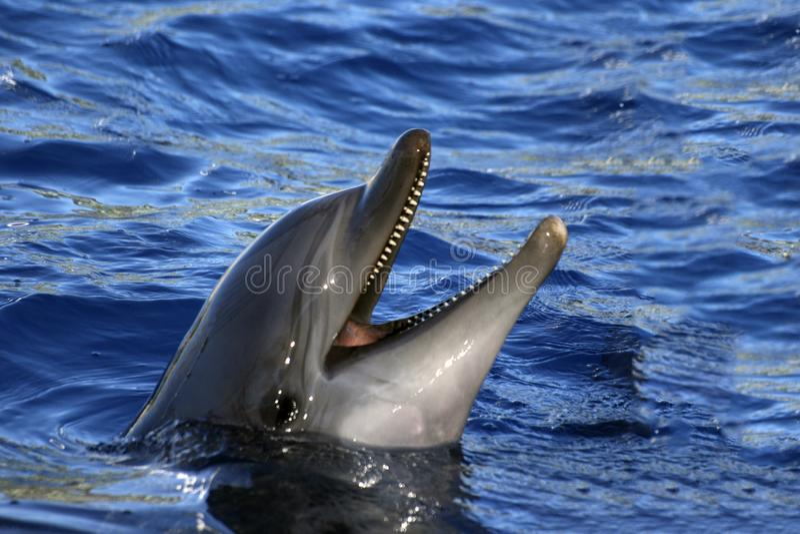 Ευτυχές δελφίνι στο ενυδρείο στοκ εικόνες