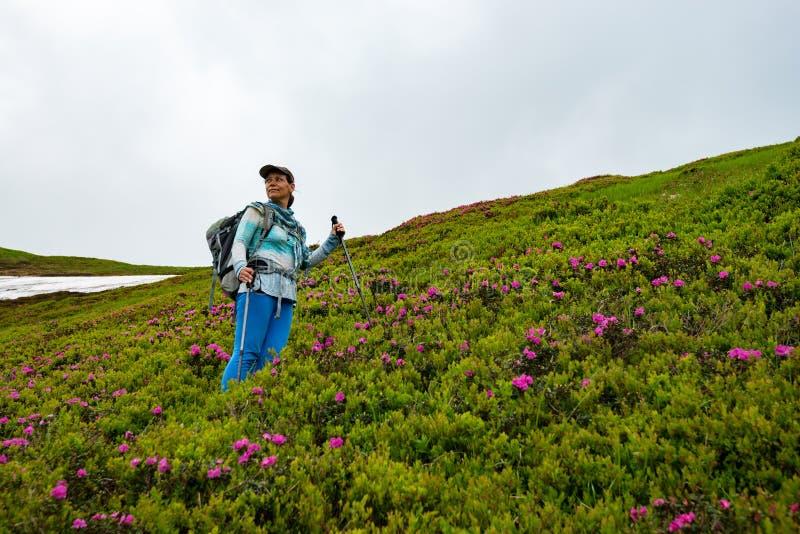 Ευτυχές θηλυκό τυχοδιωκτών μεταξύ ανθίζοντας ρόδινα rhododendrons στοκ εικόνες με δικαίωμα ελεύθερης χρήσης