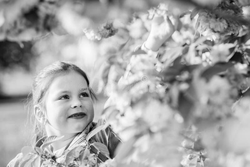 Ευτυχές κορίτσι στο λουλούδι κερασιών Άνθιση δέντρων Sakura μυρωδιά ανθών, αλλεργία το μικρό κορίτσι ανθίζει την άνοιξη την άνθισ στοκ φωτογραφίες με δικαίωμα ελεύθερης χρήσης