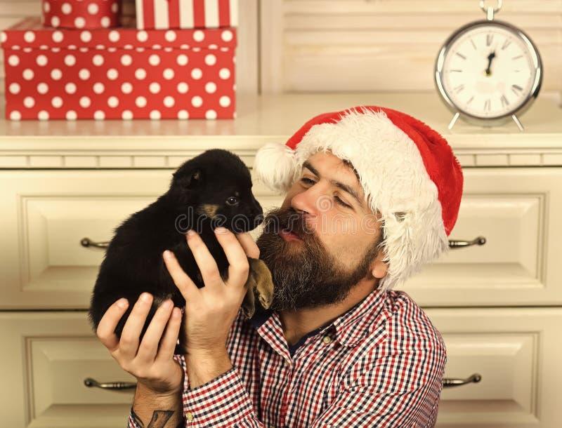 Ευτυχές κουτάβι φιλιών ατόμων Χριστουγέννων Νέο έτος σκυλιού στοκ φωτογραφία με δικαίωμα ελεύθερης χρήσης