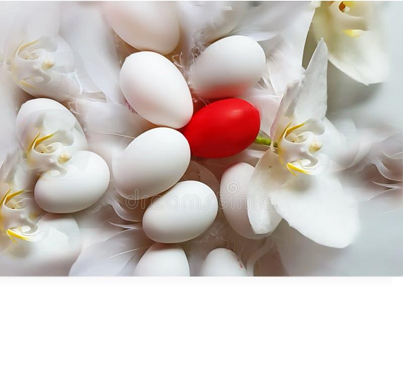 Ευτυχές κόκκινο λευκό αυγών Πάσχας με την κόκκινη κίτρινη απεικόνιση σχεδίου διακοπών θέματος Πάσχας ανοίξεων υποβάθρου ορχιδεών στοκ φωτογραφία με δικαίωμα ελεύθερης χρήσης