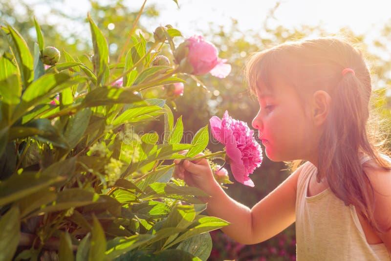 Ευτυχές μικρό κορίτσι που μυρίζει τα ευώδη ρόδινα peonies στοκ εικόνες με δικαίωμα ελεύθερης χρήσης